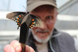 W.butterfly.lr